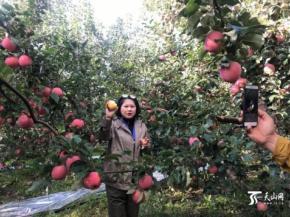 新疆阿克苏与全国采购商签约71亿元农产品